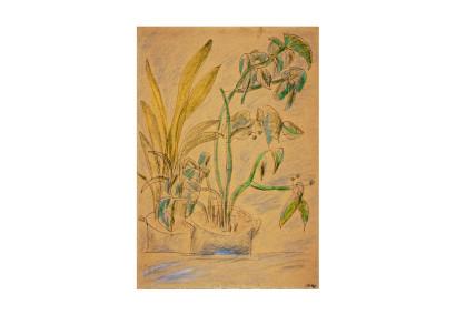 Leonid Lamm Hause Plants
